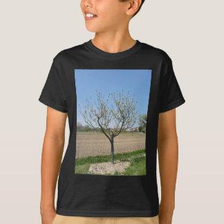 タスカニー、イタリアの花の独身のなナシ木 Tシャツ