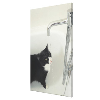 タップからの猫の飲料水の点滴注入 キャンバスプリント