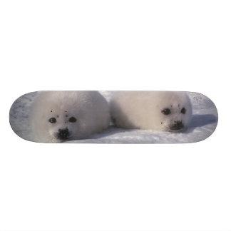 タテゴトアザラシ(Phocaのgroenlandica)のタテゴトアザラシ子犬 オリジナルスケートボード