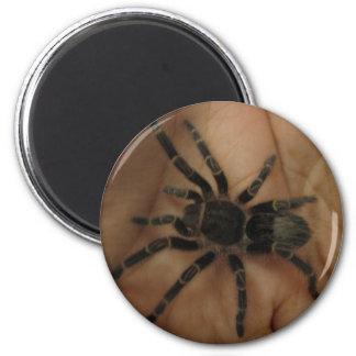 タランチュラの磁石 マグネット