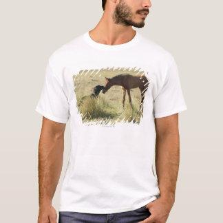 タリファ、カディス、アンダルーシア、スペイン2 Tシャツ