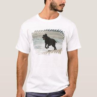 タリファ、カディス、アンダルーシア、スペイン Tシャツ