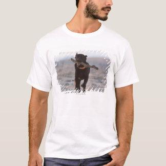 タリファ、カディス、スペイン Tシャツ