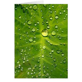 タロイモの葉の雨滴 カード