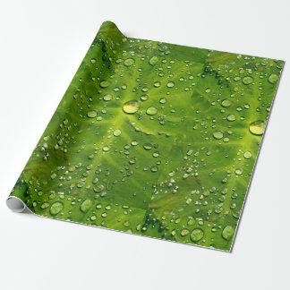 タロイモの葉の雨滴 ラッピングペーパー