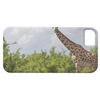 タンザニアのサファリ、アフリカ。 2 iPhone SE/5/5s ケース