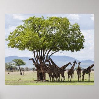 タンザニアのMikumiの国立公園のサファリ、 ポスター