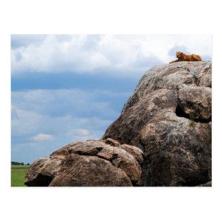 タンザニアアフリカの大きい石にあっているライオン ポストカード