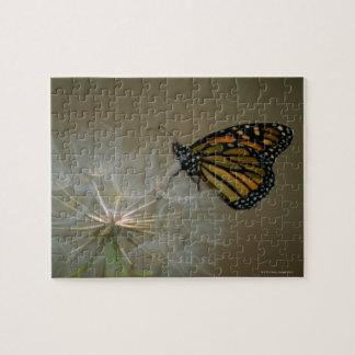 タンポポの(昆虫)オオカバマダラ、モナーク ジグソーパズル