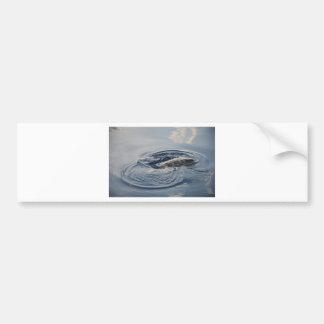 ダイビングのカメ バンパーステッカー