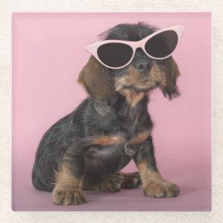 ダックスフントの子犬の身に着けているサングラス ガラスコースター