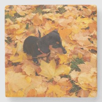 ダックスフントの子犬 ストーンコースター