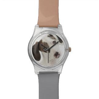 ダックスフントまたはチワワの女性の子犬の凝視 腕時計