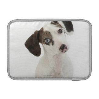 ダックスフントまたはチワワの女性の子犬の凝視 MacBook スリーブ