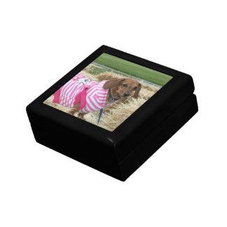 ダックスフント犬のギフト用の箱 ギフトボックス