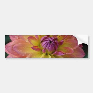 ダリアの花の開花 バンパーステッカー