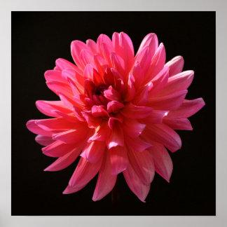 ダリアの芸術のカルマのFuchsianaのサイケデリックなピンクの花 ポスター