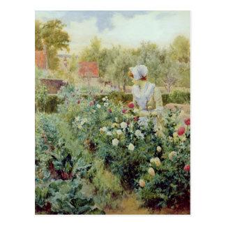 ダリア1896年 ポストカード