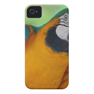 チェスター Case-Mate iPhone 4 ケース