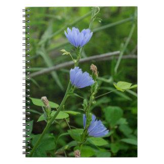 チコリーの野生の花の青い野生の花のノート ノートブック