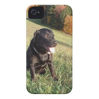 チャート犬 Case-Mate iPhone 4 ケース