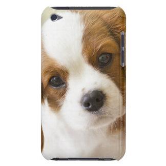 チャールズ王スパニエル犬の子犬のポートレート Case-Mate iPod TOUCH ケース