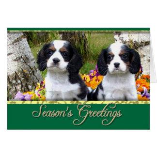 チャールズ王スパニエル犬の子犬 カード