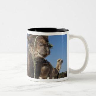 チュニジア、サハラ砂漠の砂漠、Douzの地帯Touristique、 ツートーンマグカップ