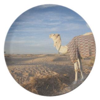 チュニジア、サハラ砂漠の砂漠、Douzの素晴らしい砂丘、ラクダ、 プレート