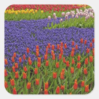 チューリップおよびムスカリの花、2のパターン スクエアシール