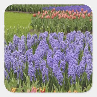 チューリップおよびHyacinthの庭、Keukenhofの庭、 スクエアシール