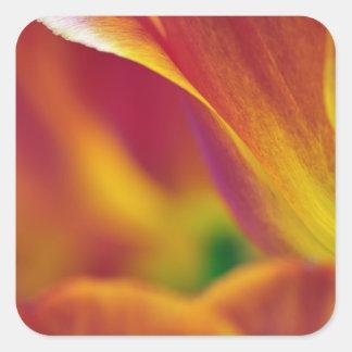 チューリップの花、4の下側のクローズアップ スクエアシール