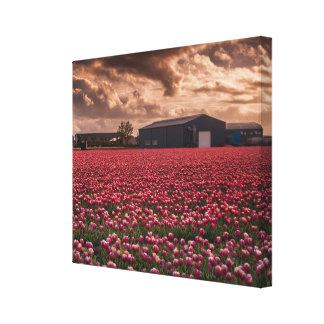 チューリップ分野のオランダの景色の独身のなキャンバス キャンバスプリント