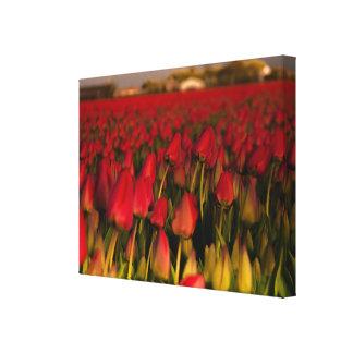 チューリップ分野のオランダの赤い景色の独身のなキャンバス キャンバスプリント