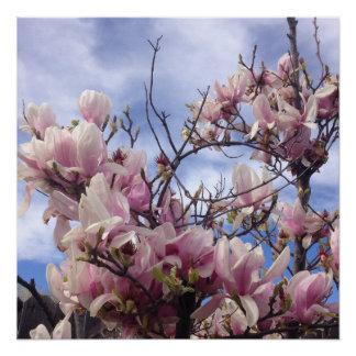 チューリップ木の花 ポスター
