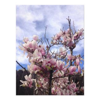 チューリップ木の花。 マグノリアのsoulangeana フォトプリント