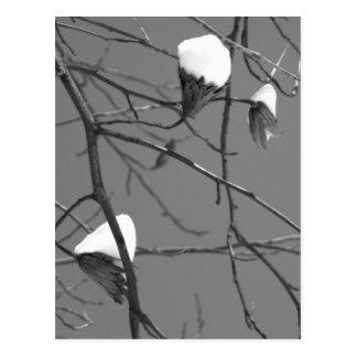 チューリップ木の雪 ポストカード