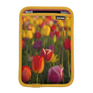 チューリップ、チューリップのフェスティバル、Woodburn、オレゴン、米国2 iPad Miniスリーブ