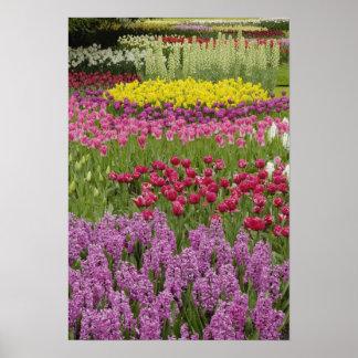 チューリップ、ラッパスイセンおよびhyacinthの庭 ポスター