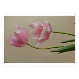 チューリップ tulip 葉書き