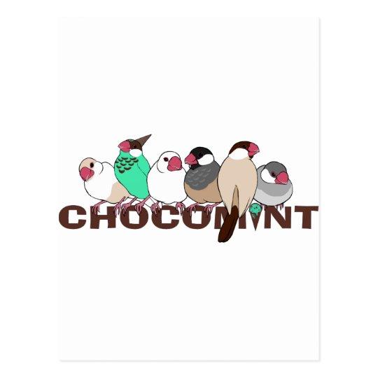 チョコミント 文鳥 ポストカード