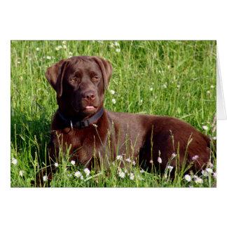 チョコレートラブラドル・レトリーバー犬の小犬のメッセージカード カード