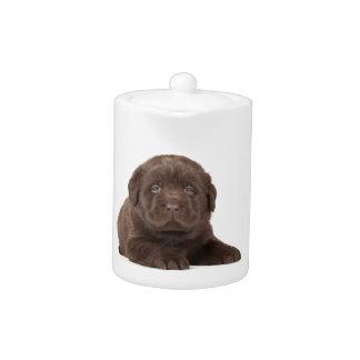 チョコレート実験室の子犬