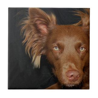 チョコレート犬 タイル