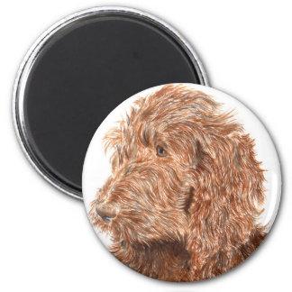 チョコレートLabradoodle #2の磁石 マグネット