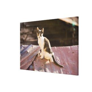 チリ、バルパライソ。 屋根の猫 キャンバスプリント