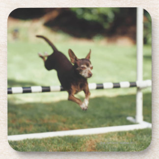 チワワのハードル跳躍の コースター