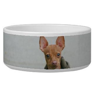 チワワ犬ボール
