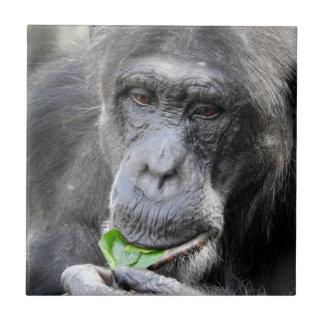 チンパンジーのタイル タイル
