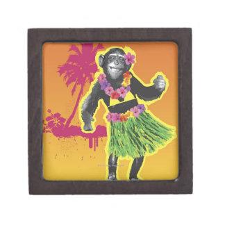 チンパンジーのフラの踊り ギフトボックス
